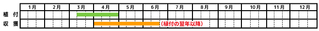 アスパラガス_栽培カレンダー