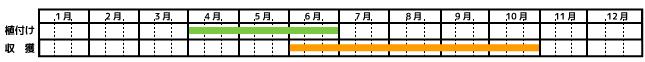 バジル_栽培カレンダー