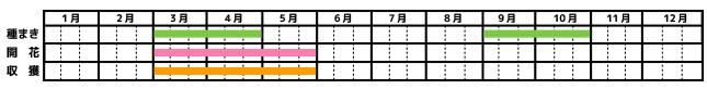 ジャーマンカモミール_栽培カレンダー