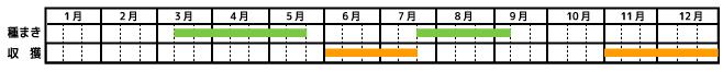 人参_栽培カレンダー