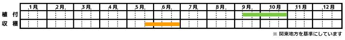 にんにく_栽培カレンダー