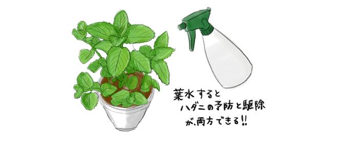 葉水_やり方