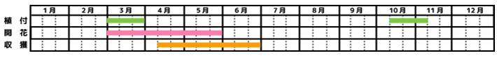 いちご_栽培カレンダー