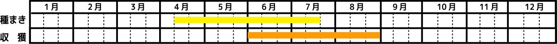 いんげん_栽培カレンダー