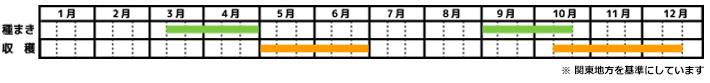 カブ_栽培カレンダー