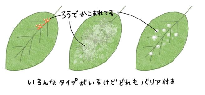 カイガラムシの生態