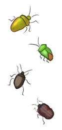 カメムシの種類
