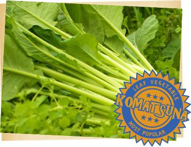 小松菜栽培方法