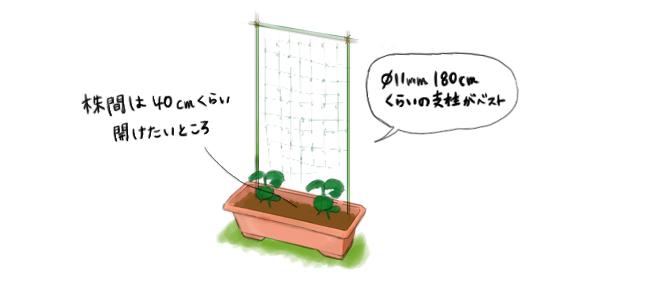 きゅうりの支柱とネット
