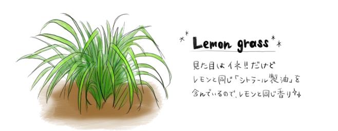 レモングラス_外見