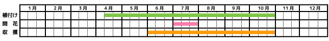 レモングラス_栽培カレンダー