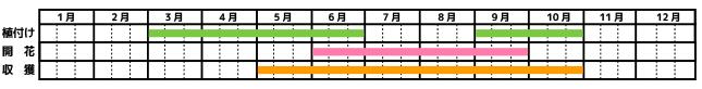 ミント_栽培カレンダー