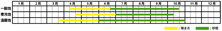 大葉・青じそ_栽培カレンダー