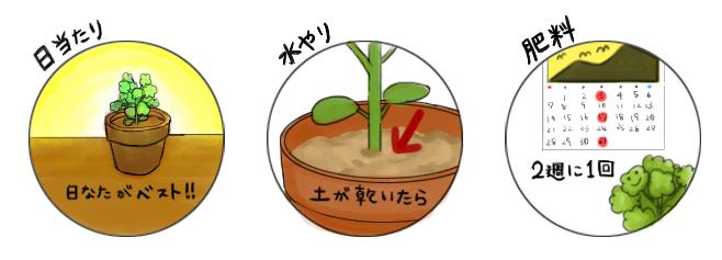 アスパラガス_栽培のポイント