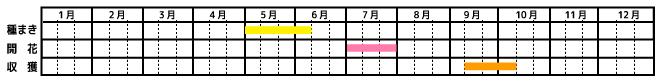 落花生_栽培カレンダー