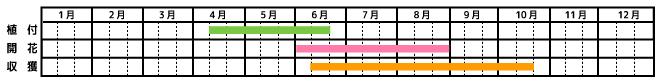 唐辛子_栽培カレンダー