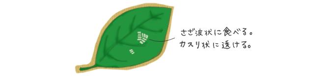 テントウムシダマシの食害跡
