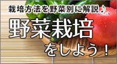 野菜栽培をしよう!