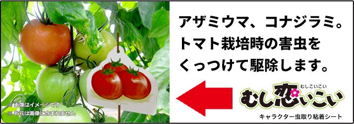 トマトの害虫駆除