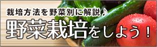 野菜栽培をしよう